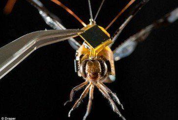 Учені створили комах-кіборгів, які можуть шпигувати за будь-ким