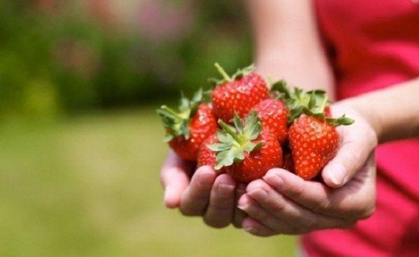 Вирощуємо полуницю без хімії