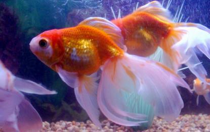В Америці британця засудили за вбивство акваріумної рибки