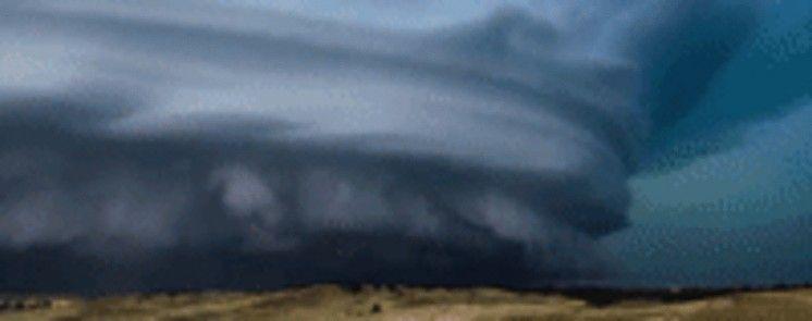 Кіт-співун і неймовірне відео шторму. Тренди мережі