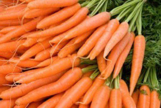 Викопуємо, сортуємо і кладемо в пісок: як зібрати врожай моркви