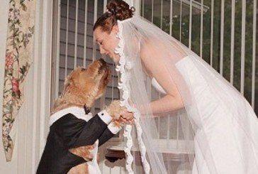Британка вийшла заміж за свого собаку