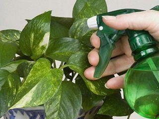 Як врятувати вазони від пилу і бруду