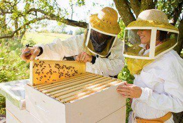 У нашій країні цьогоріч загинуло до 45 тисяч бджолиних сімей