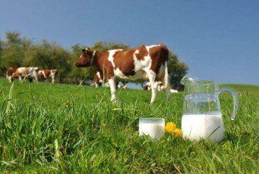 На Тернопільщині – найдешевше молоко