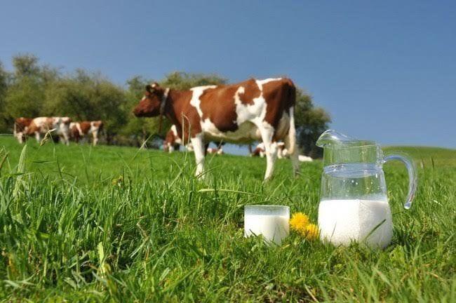Селяни Тернопільщини з Нового року не зможуть здавати домашнє молоко