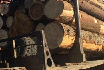 Водія з Львівщини зборівські поліцейські зупинили з цілою вантажівкою дров