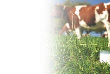 Молочну революцію перенесли: чого чекати тернопільським селянам і покупцям?