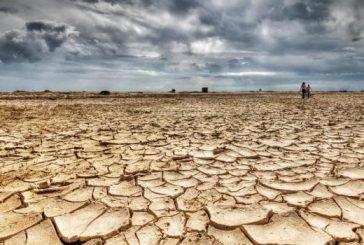 Земля збідніє: багато видів рослин і тварин можуть зникнути назавжди