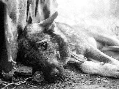 У Тернополі поліція розслідує факти жорстокого поводження з тваринами