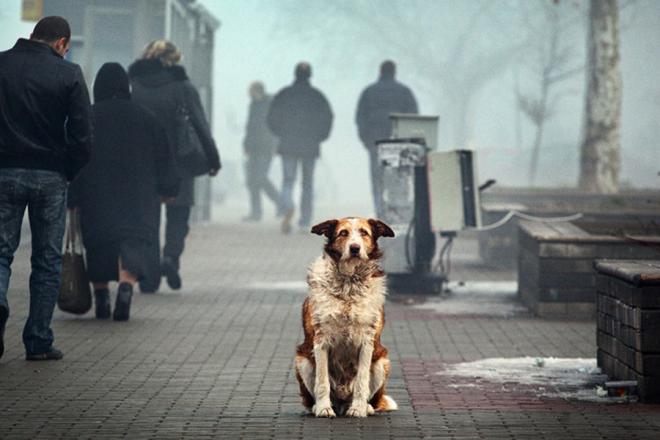 В Іспанії детективи стежитимуть за вигулом собак