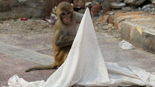 В Індії мавпа викрала немовля і вкинула його у криницю