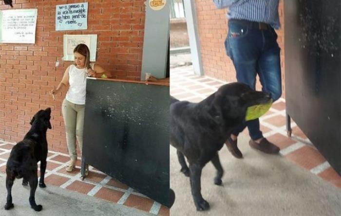 Листя замість грошей: у Колумбії вуличний собака сам платить за їжу (ФОТО)