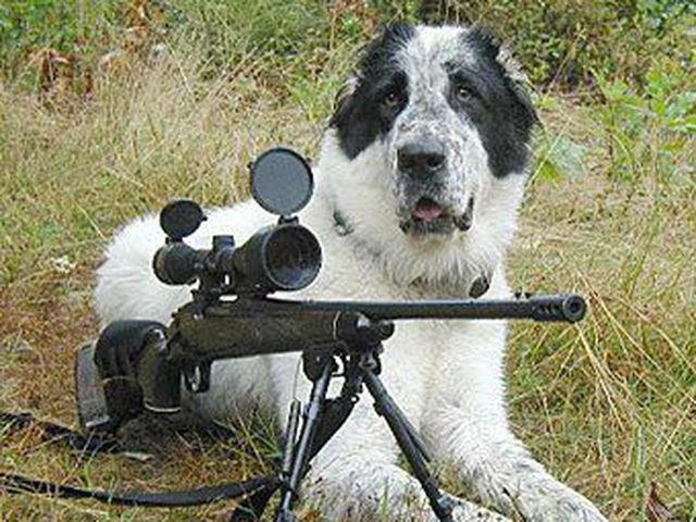 Жителя Айови підстрелив його власний собака