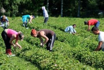 Українські заробітчани в Польщі на вагу золота