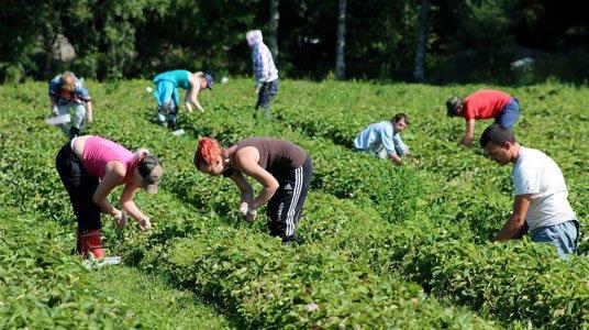 У поляків та наших заробітчан майже однакова платня