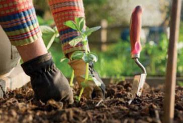 Лікувальні трави допоможуть і рослинам