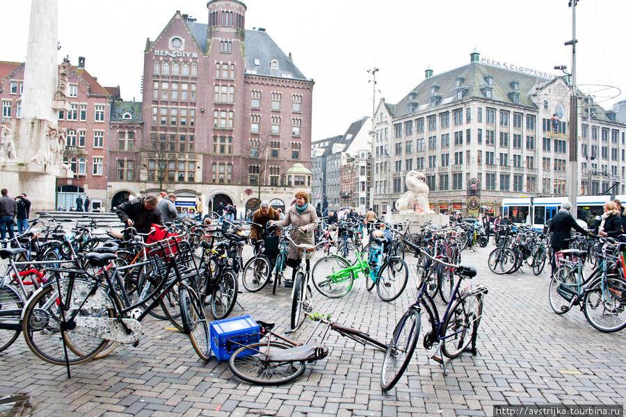 У Нідерландах доплачуватимуть тим, хто їздить на роботу велосипедом