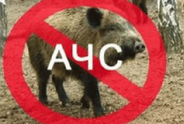 У Підволочиському районі зафіксовано спалах африканської чуми свиней