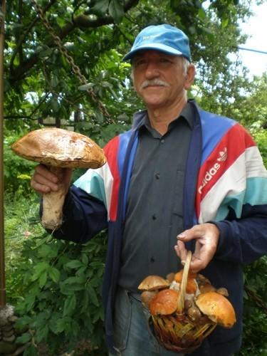 У лісі під Луцьком знайшли гігантського гриба (ФОТО)