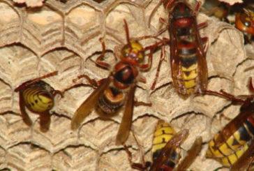 На Тернопільщині рятувальники знешкодили кілька кубел небезпечних комах