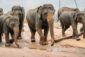 Як тернополянка побувала на острові чаю, слонів і щастя (ФОТОРЕПОРТАЖ)