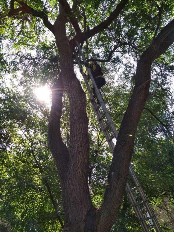 У Дніпрі п'ятеро рятувальників на спецтехніці знімали з дерева кота який благав про допомогу (ФОТО)