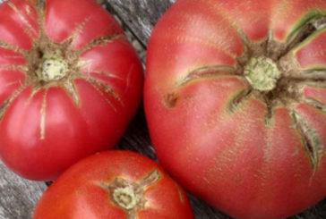 Щоб помідори не тріскали