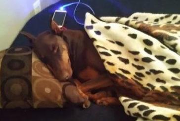 Неймовірна історія: у США хлопчик продав усі свої іграшки, аби вилікувати собаку (ФОТО, ВІДЕО)