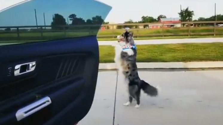 Пес дає майстер-клас з танців біля машини (ВІДЕО)