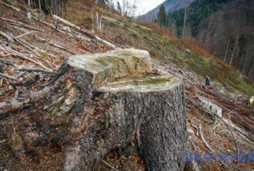 Євросоюз заполонила нелегальна деревина з України (ВІДЕО)