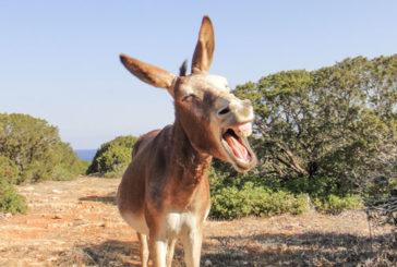 У Греції посилили права віслюків