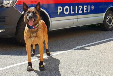 У Цюриху власників собак попросили взути вихованців