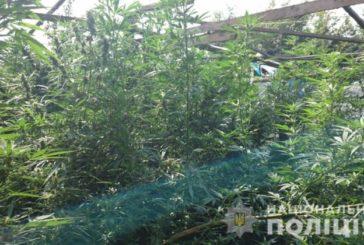 На Борщівщині чоловік вирощував у теплиці замість помідорів коноплю (ФОТО)