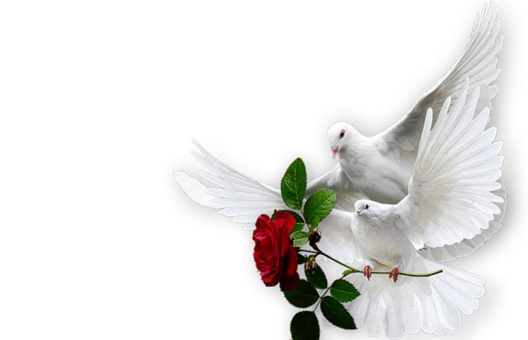 Біла голубка зі смутком на крилі