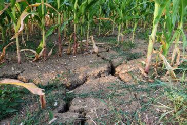 У Чехії – екстремальна посуха