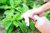 Домашній винищувач бур'янів: врятувати грядки допоможе сіль і оцет