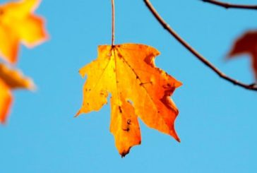 Золота осінь: сьогодні на Тернопільщині – сухо, тепло, сонячно