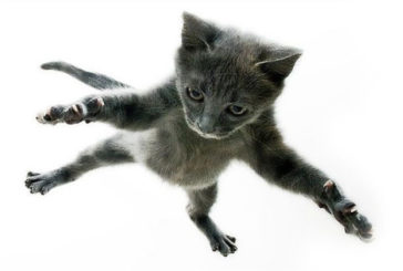 Італієць виграв суд проти господині кота-камікадзе