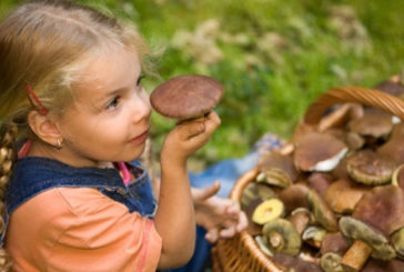 Грибна пора, або 12 грибних страв на будь-який смак