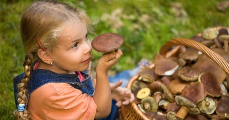 Не збирайте гриби у спеку та зберігайте не довше доби
