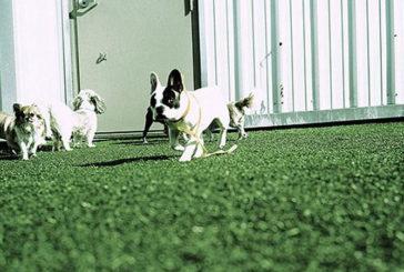 В Англії відкрили 5-зірковий готель для собак