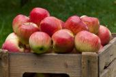 Як смакувати яблуками до весни