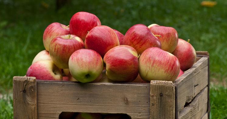 Як зберегти яблука до Нового року?