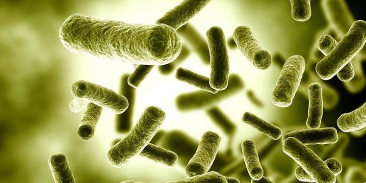 Бактерії навчилися впадати в сплячку, щоб врятуватися від антибіотиків