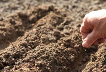 Тернополянам радять, як уберегтися від підробок, купуючи насіння