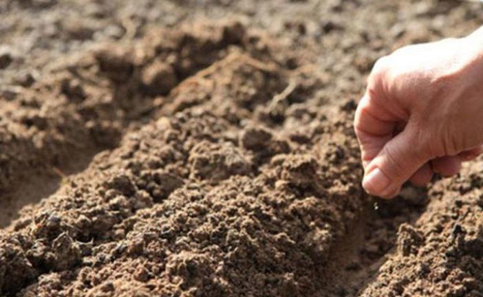 Визначаємо кислотність ґрунту на городі
