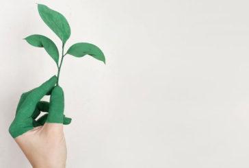У ТНЕУ розпочала роботу лабораторія студентських зелених бізнес-проектів