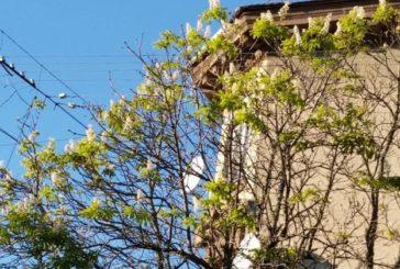 Уже й Покрова минула, а каштани в Тернополі цвітуть… (ФОТО)