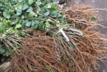 47-річний житель Гусятинського району вирішив підзаробити на продажі крадених дерев